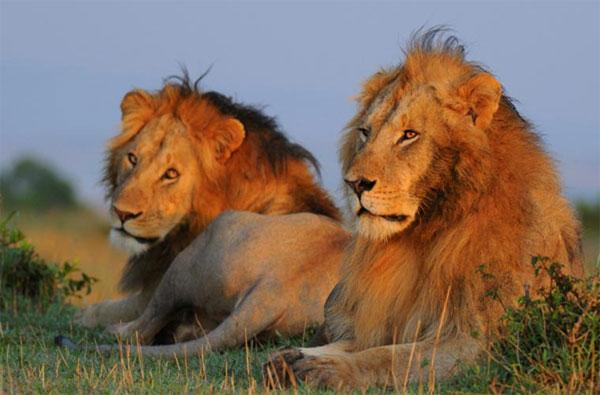 Top 10 động vật quan hệ tình dục đồng giới