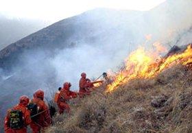 Trái đất nóng lên gây cháy rừng