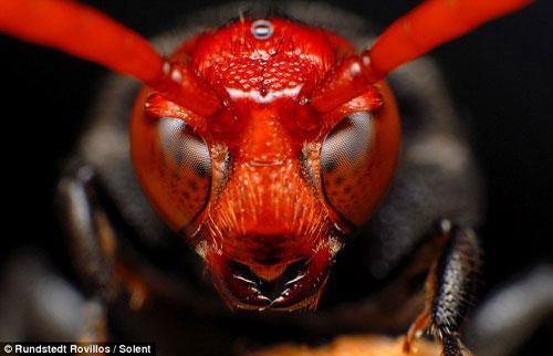 Tuyệt đẹp những côn trùng... ngoài hành tinh!