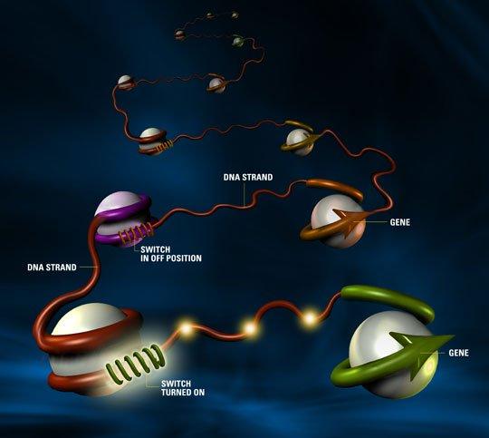 Vai trò to lớn của công nghệ tổ hợp gen nhân tạo