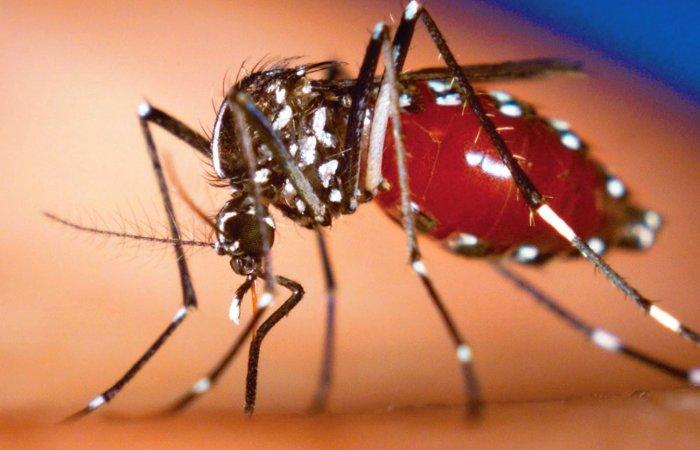 Virus ăn não do muỗi truyền lan rộng nhiều nước
