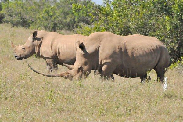 VN-Nam Phi sắp ký MoU ngăn buôn bán sừng tê giác