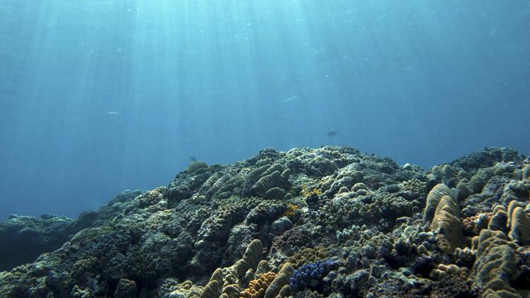 Vùng chết khổng lồ có thể xuất hiện trên đại dương năm 2030