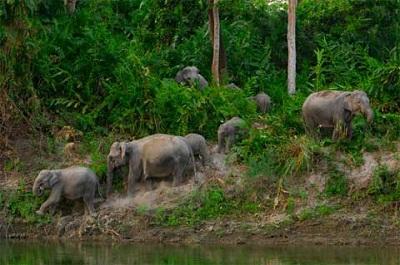 Vương quốc của voi và hổ