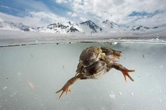 Xem ếch yêu trên độ cao 1.800m