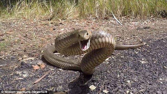 Australia: Tất cả các loài mang nọc độc kinh khủng nhất thế giới đều tập trung tại đây!