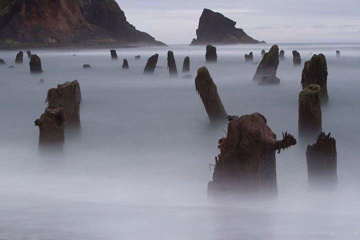 """Bí ẩn """"khu rừng ma"""" 2000 năm tuổi xuất hiện trên mặt biển nước Mỹ"""