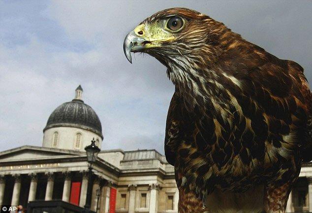 Bí mật bất ngờ biến chim ưng thành loài săn mồi đỉnh nhất thế giới