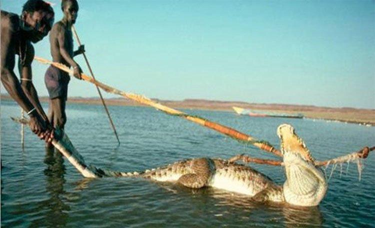 Bộ tộc ít người, sống như thời nguyên thủy, săn lùng hà mã và cá sấu để ăn thịt