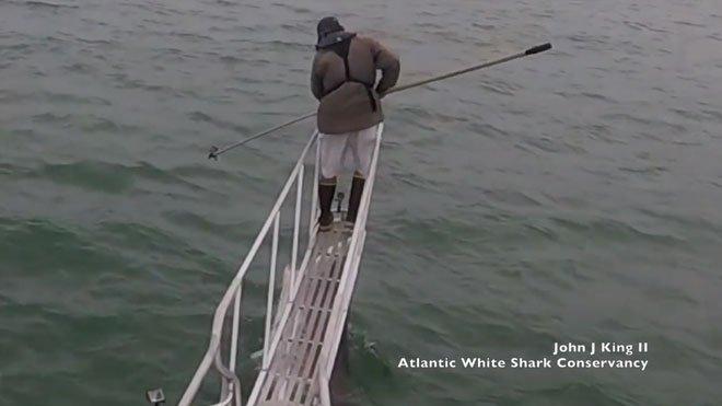Cá mập trắng vọt lên khỏi mặt nước, định đớp nhà nghiên cứu đang đứng trên thuyền