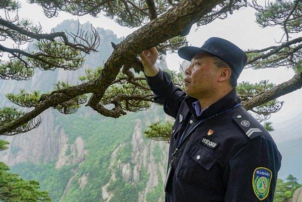 Cây thông nghìn năm tuổi nổi tiếng nhất Trung Quốc sắp chết vì nhiều người yêu quý quá