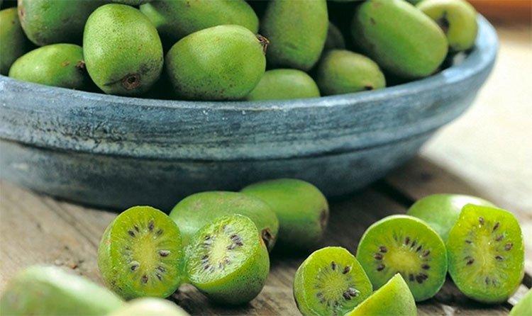Chắc chắn 9/10 người sẽ lầm khi chỉ nhìn bề ngoài loại trái cây này!