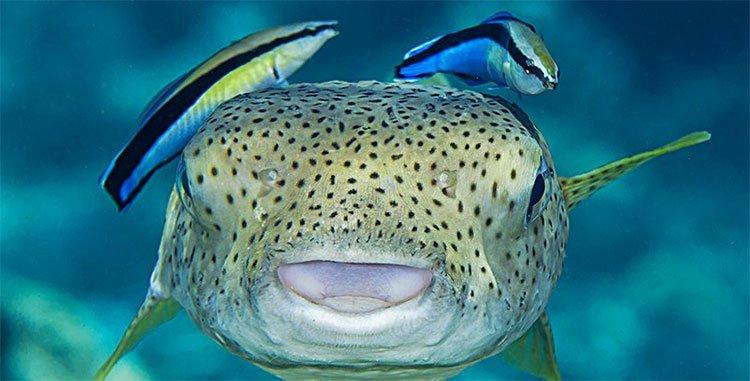Chú cá này lại có thể vượt qua bài test nhận thức đến chó meo cũng bó tay