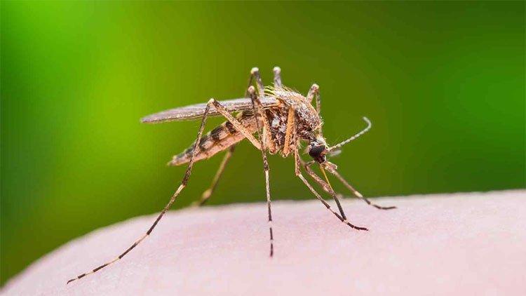 Có nên gãi sau khi bị muỗi đốt?
