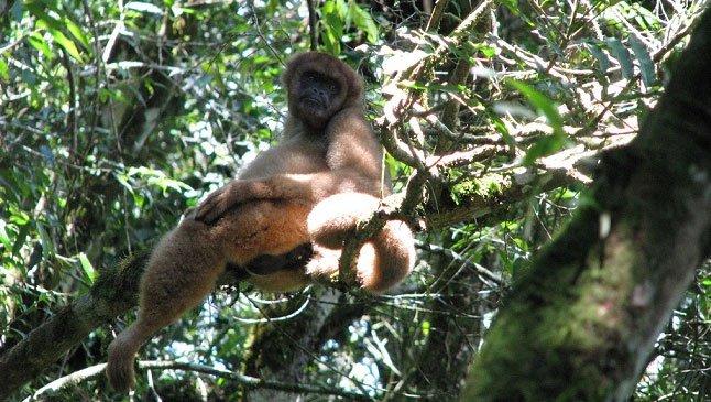 'Cơn lốc tuyệt chủng đang tràn qua cánh rừng nhiệt đới ở Brazil