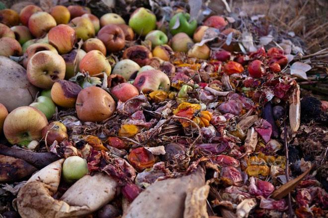 Dân châu Âu thẳng tay vứt bỏ 50 triệu tấn rau củ quả mỗi năm chỉ vì nhìn chúng xấu