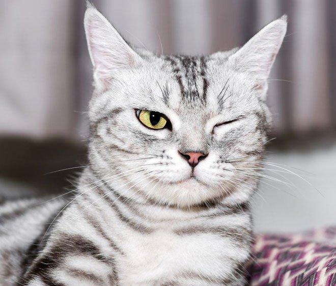 Dành cả thanh xuân để ngủ, nhưng các boss mèo nằm mơ thấy điều gì?