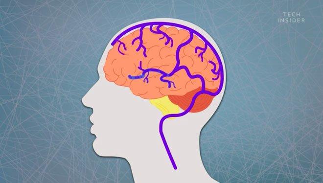 Đông não - hiện tượng tưởng lạ nhưng khối người đã từng trải qua