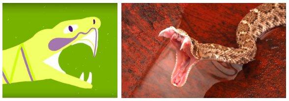 Ếch, rắn, thằn lằn... có nọc độc cực nguy hiểm nhưng vì sao chúng không tự làm hại mình?