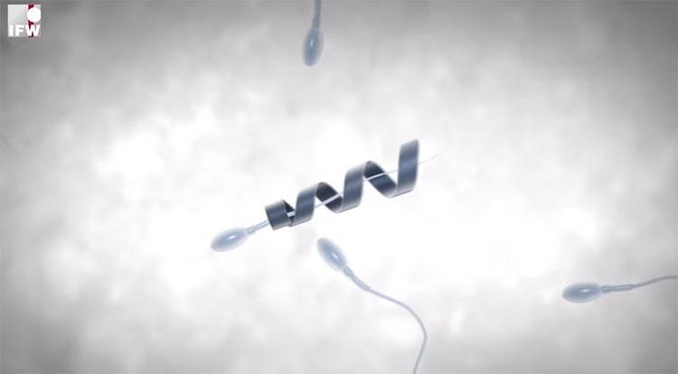 Gắn mô tơ vào đuôi tinh trùng yếu để chữa vô sinh