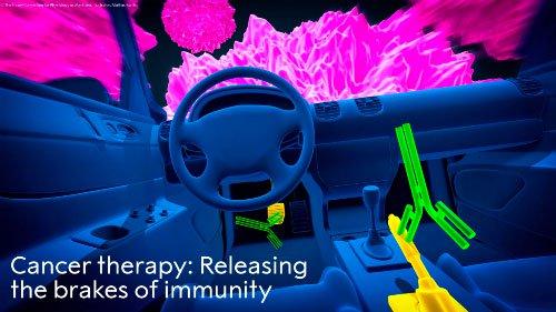 Hy vọng chữa khỏi ung thư từ liệu pháp giành giải Nobel Y học 2018