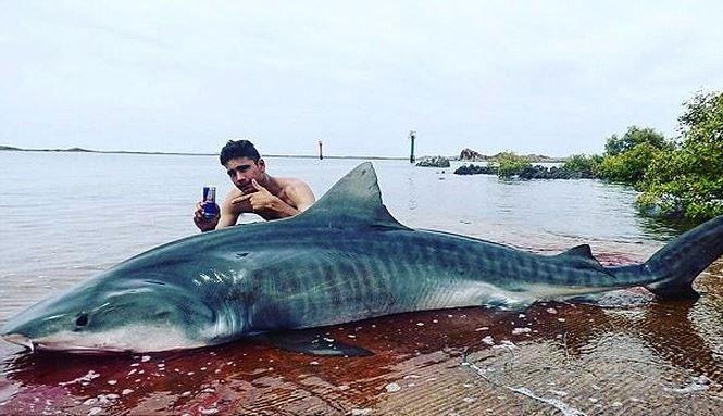 Kịch tính chàng trai khuất phục cá mập hổ dài 4m suốt 3 tiếng