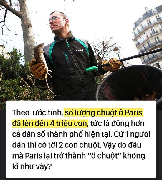Kinh hoàng cơn bão chuột cống kéo đến khắp kinh đô ánh sáng Paris