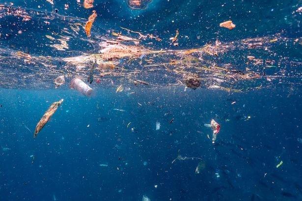 Kinh khủng cảnh cá đuối bơi giữa biển rác ni lông