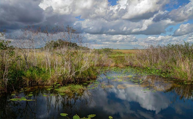 Loài siêu trăn trỗi dậy đe dọa môi trường sống con người ở Florida