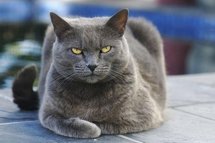 Lời đồn con quỷ mèo ở Nhà Trắng chỉ xuất hiện trước mỗi thảm họa khủng khiếp ở Mỹ