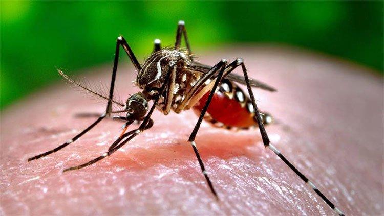 Nghiên cứu mới: Không phải nhóm máu, đây mới là lý do vì sao muỗi chọn người mà đốt