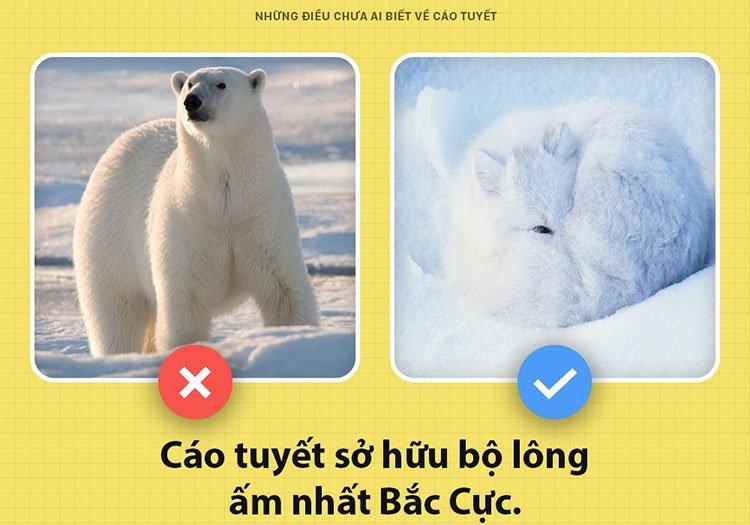 Những điều chưa ai biết về cáo tuyết