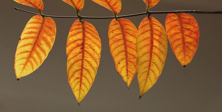 Những khoảnh khắc mùa thu Hà Nội đẹp nao lòng