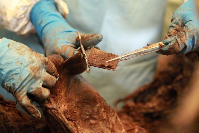 Phát hiện hài cốt voi ma mút với các mô mềm và lông