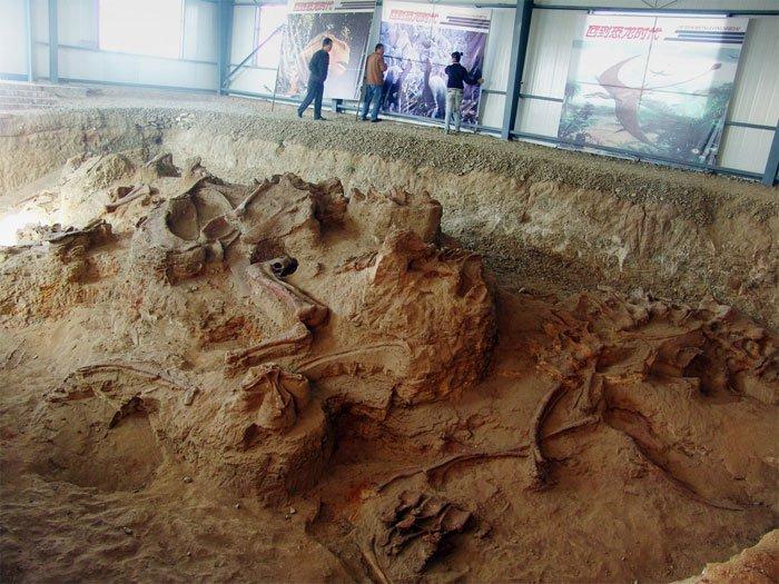 """Phát hiện hóa thạch """"rồng kì diệu"""" ở Trung Quốc"""