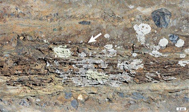 Phát hiện nghĩa địa của những sinh vật đầu tiên trên đất liền