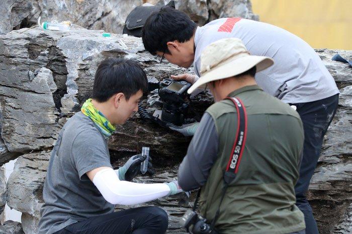 Phát hiện ổ kiến sát nhân có thể gây chết người ở Hàn Quốc