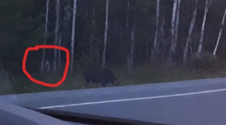 Phát hiện quái vật không mặt rình rập săn thú rừng
