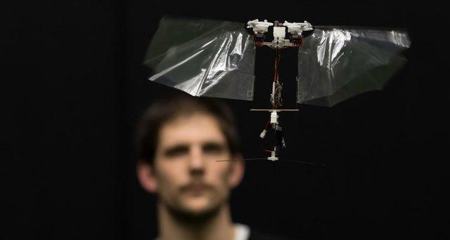 Robot bay tiết lộ bí mật về thế giới trên không của côn trùng