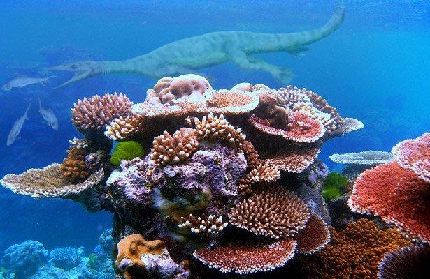 San hô xuất hiện cùng thời với khủng long