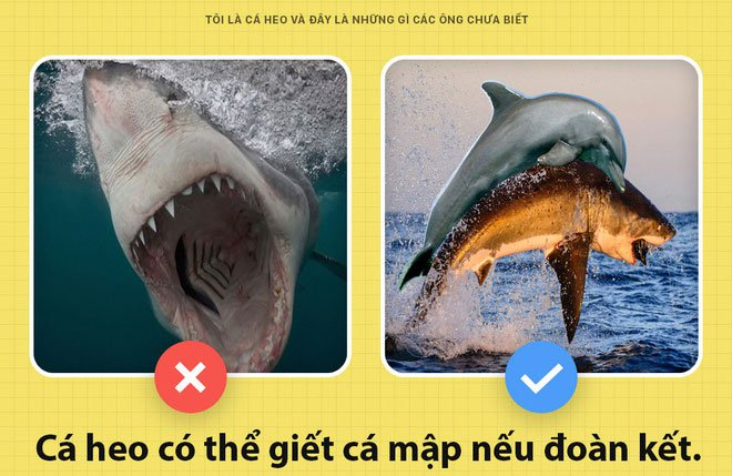 Sự thật bất ngờ về cá heo mà ít người biết
