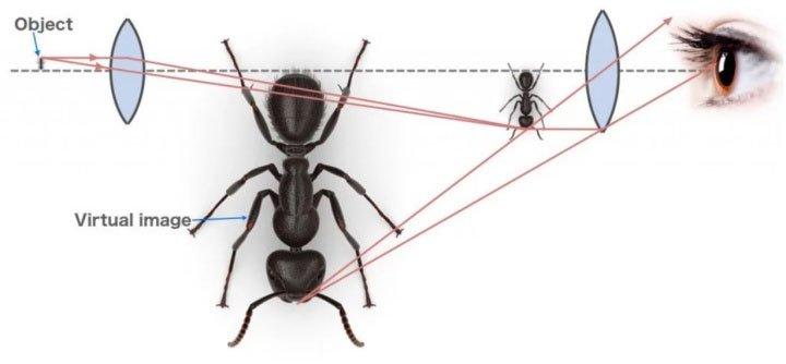 Tại sao kính hiển vi chỉ xuất ra hình ảnh đơn sắc?