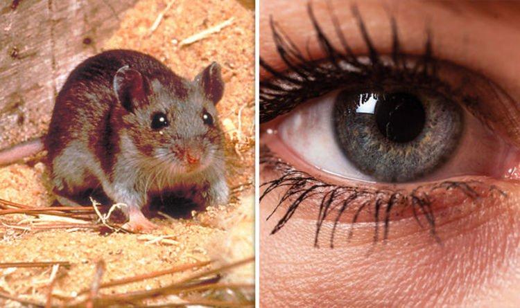 Thành công khôi phục thị lực ở chuột nhờ liệu pháp gene