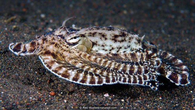 Thiên tài của đại dương? Hãy gọi tên bạch tuộc nhé!