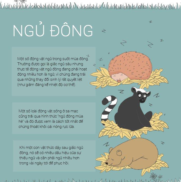 Thói quen ngủ kì dị của các loài động vật