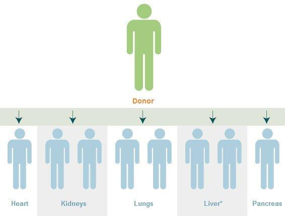 Trường hợp y tế chưa từng có: 4 người lây ung thư sau khi nhận tạng ghép từ cùng một người