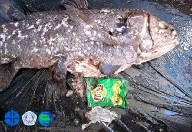 Túi nylon trong bụng loài cá hóa thạch sống