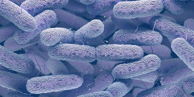 Vi khuẩn vô hại trong ruột biến thành dạng ăn thịt người, giết chết 5 bệnh nhân Trung Quốc
