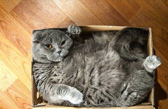 Vì sao dán băng dính thành vòng tròn và mèo sẽ ngoan ngoãn ngồi vào?