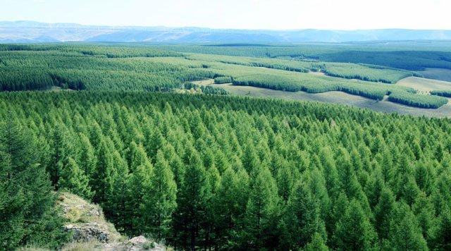 Xem Trung Quốc biến sa mạc khô cằn thành thảm rừng rộng hơn 7000 ha